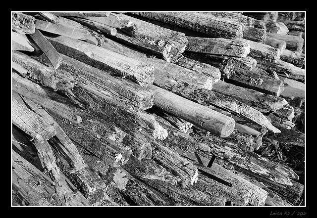 Holz-#-L1003695-2-#-Leica-X---2021