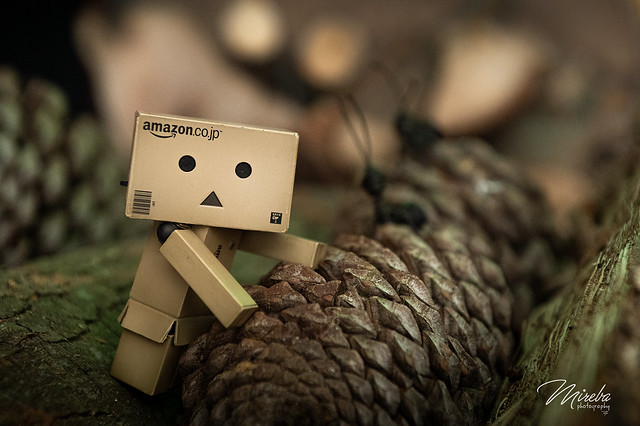 Danbo in the forest