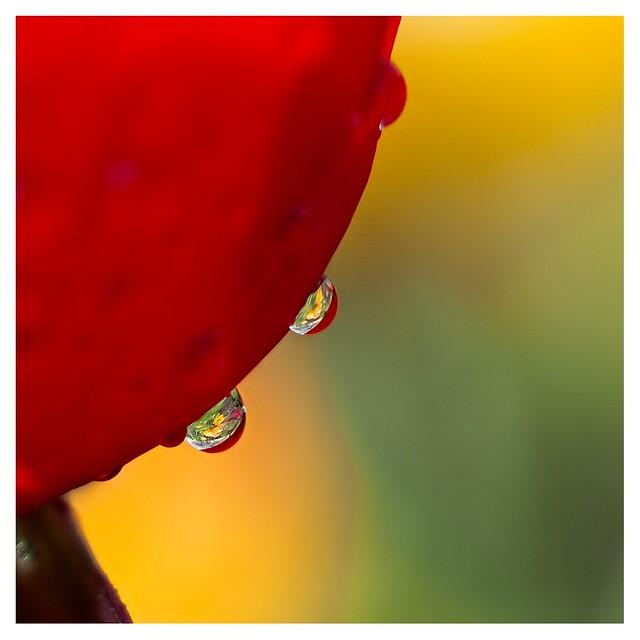 Deux gouttes de pluie