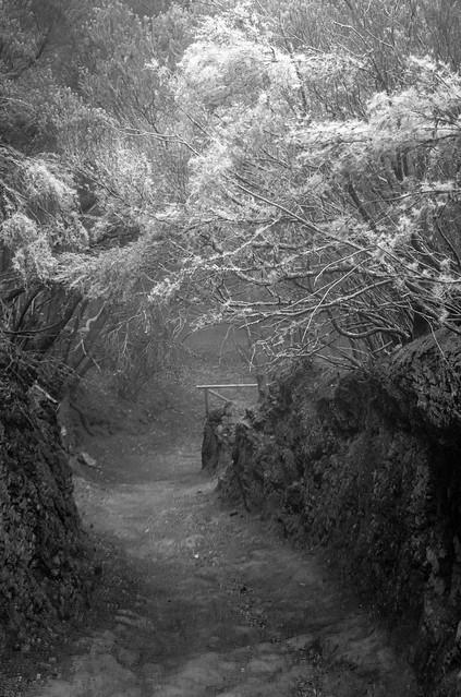 Into the Forrest / Hacia el Bosque