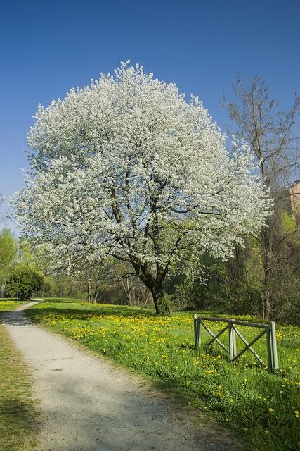 Torino, Parco Calabria