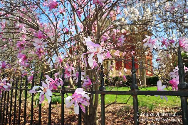 Spring pink (HFF!) *EXPLORE 4/02/21*