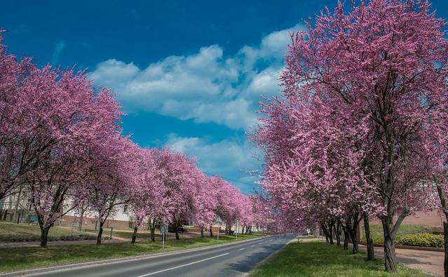 Spring home (Hungary/Tököl)