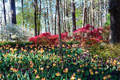 April 2 Garvin Gardens-27