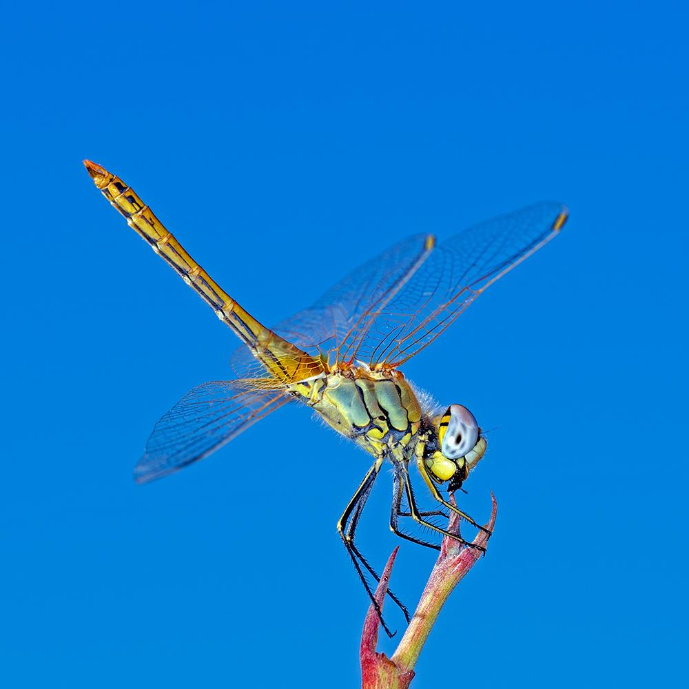 Macros/  proxi/  insectes  - Page 19 51090422882_04f8acea40_o
