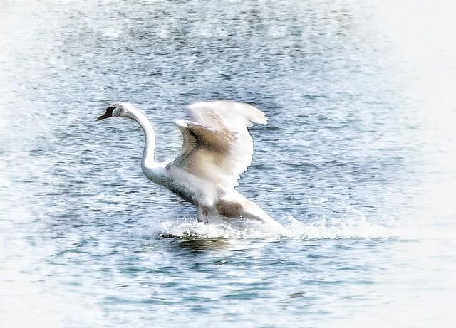 A graceful landing