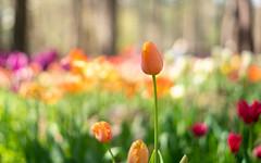 April 2 Garvin Gardens-24