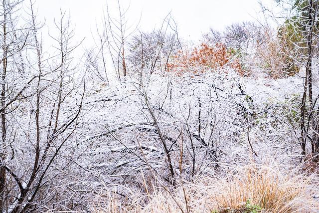 SnowStorm_026
