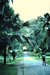 The Royal Botanical Gardens, Kandy