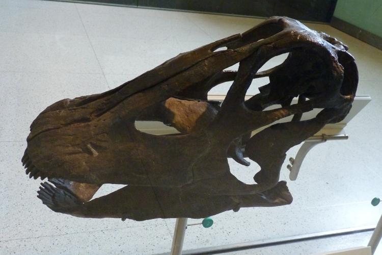 Diplodocus longus 51090539663_27267d0191_o