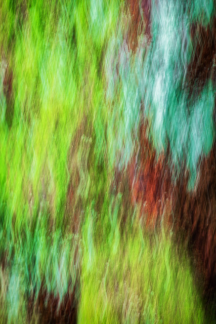 Moss, Lichen and Bark