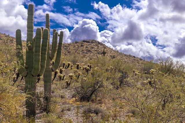 Sonoran Desert #3