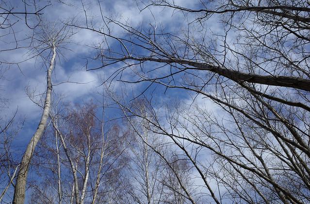 Leslie Spit, Budding Trees