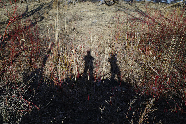 Leslie Spit, Shadows