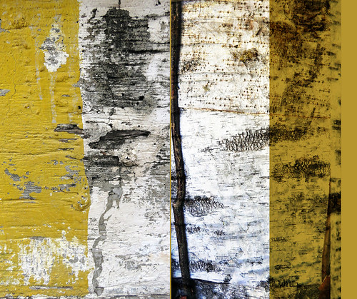 Diptych abstract of a Bronze Age wall made up of panels of the white outside bark of the birch tree, at Tanum in Sweden, compared with a mouldy wall with yellow paint that is peeling, interesting in its own way