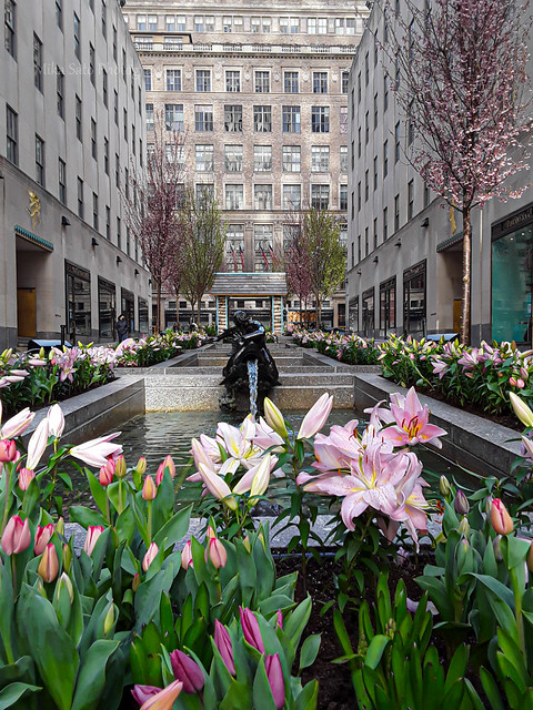The Channel Gardens
