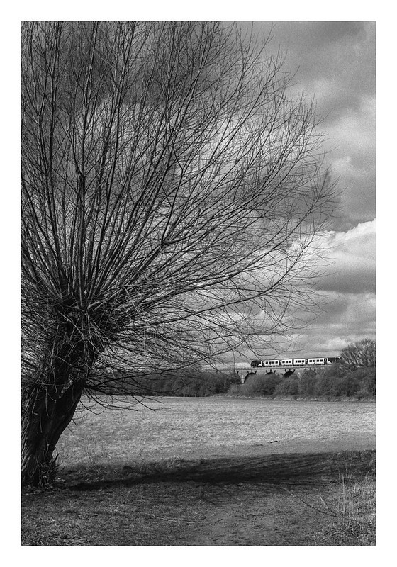 A willow and a passing train