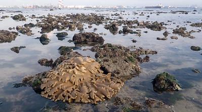 Living shores of Cyrene, Apr 2021