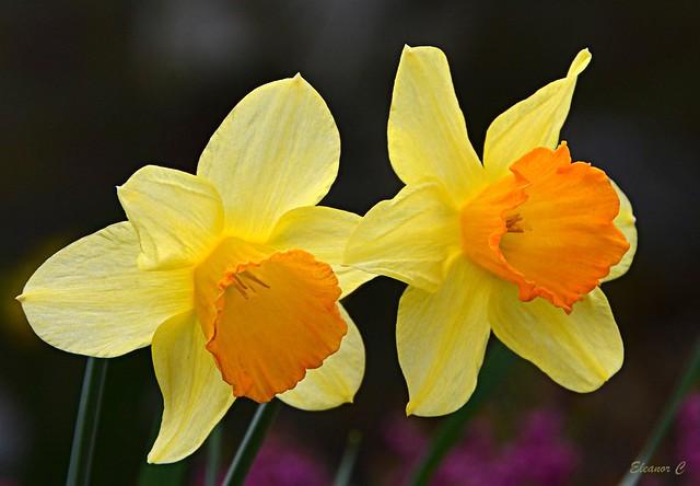 Easter Weekend Flowers