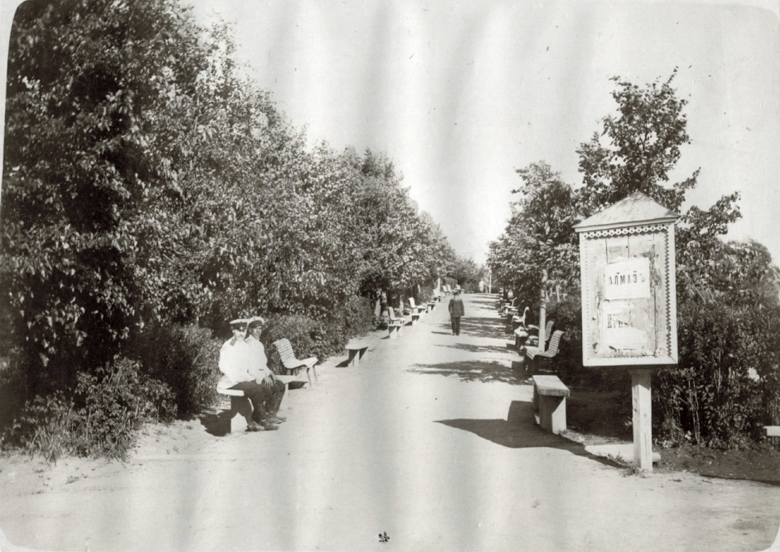 13. Городской парк. Аллея городского парка. Лето 1904
