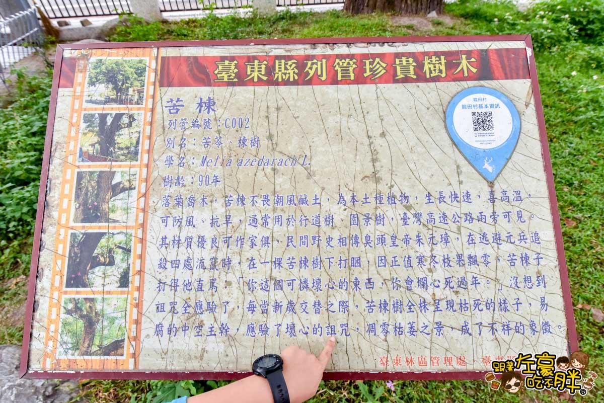台東鹿野神社 鹿野景點 -25