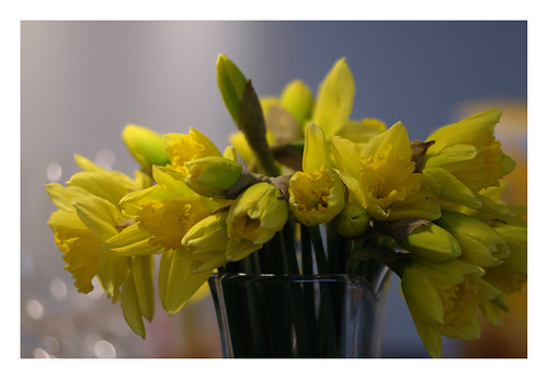 Daffodils in the kitchen