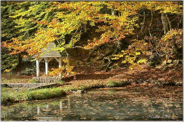 Fontaine de la Coudre - Forêt de Bercé - Sarthe