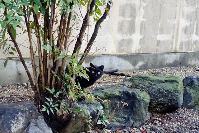 Today's Cat@2021−04−03