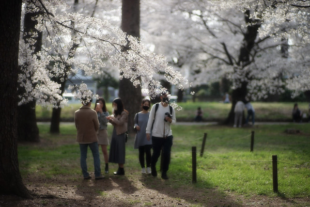 Sakura People 2021