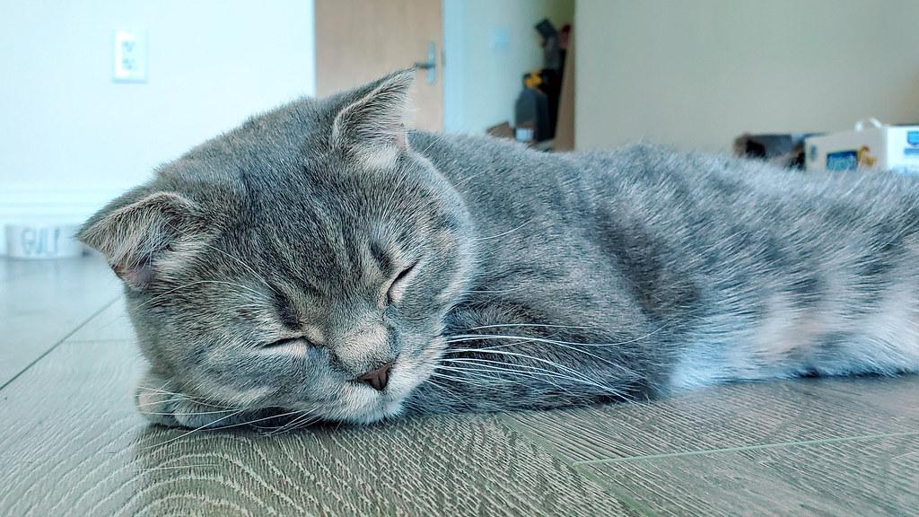 Mochi taking a nap