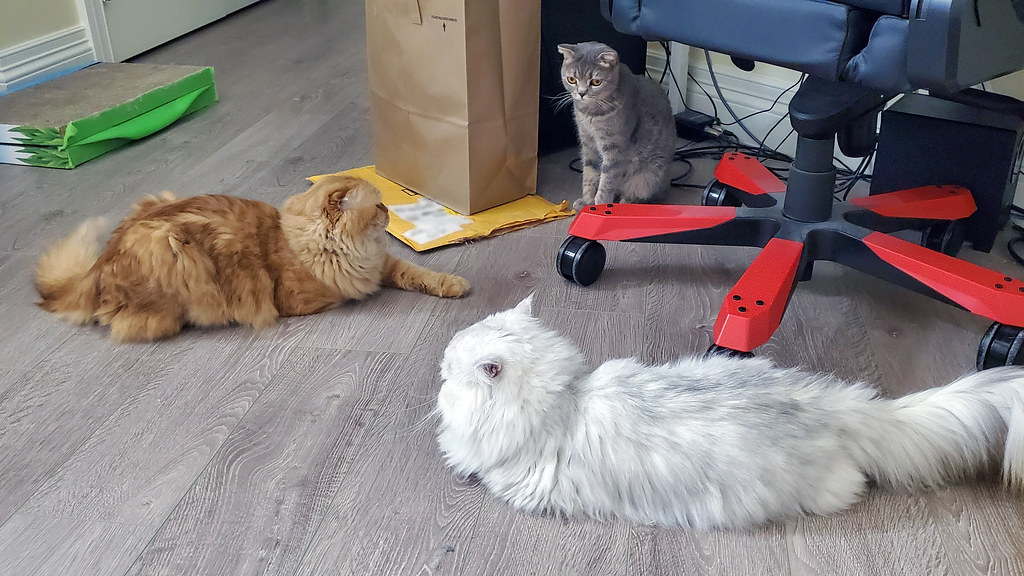 Cats in my room