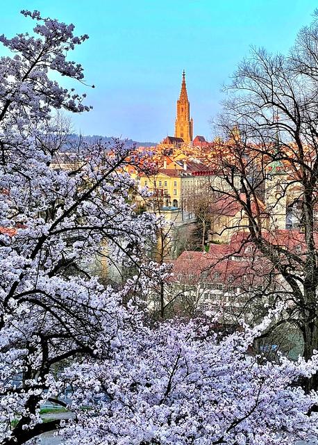 It's springtime in Bern!