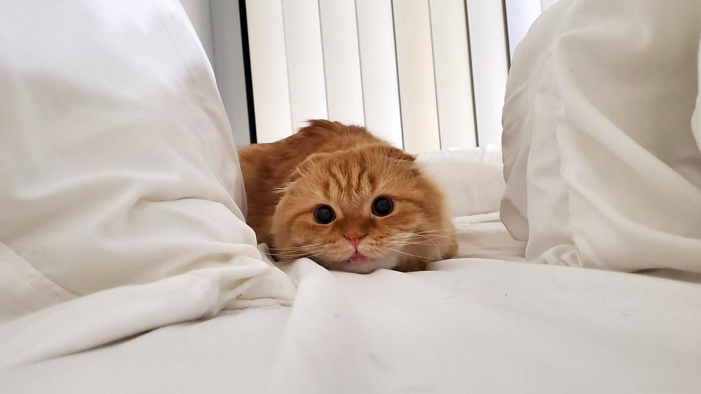 Pumpkin ready to pounce