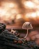 Little stowaway on a mushroom