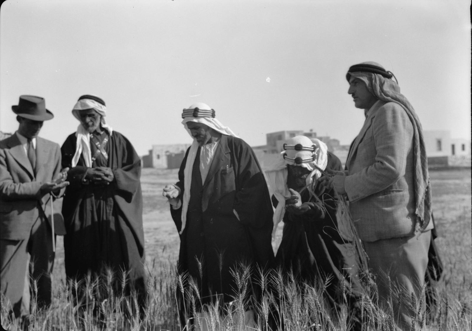 05. Субхи Эффенди Шаби объясняет бедуинским шейхам преимущества австралийской пшеницы