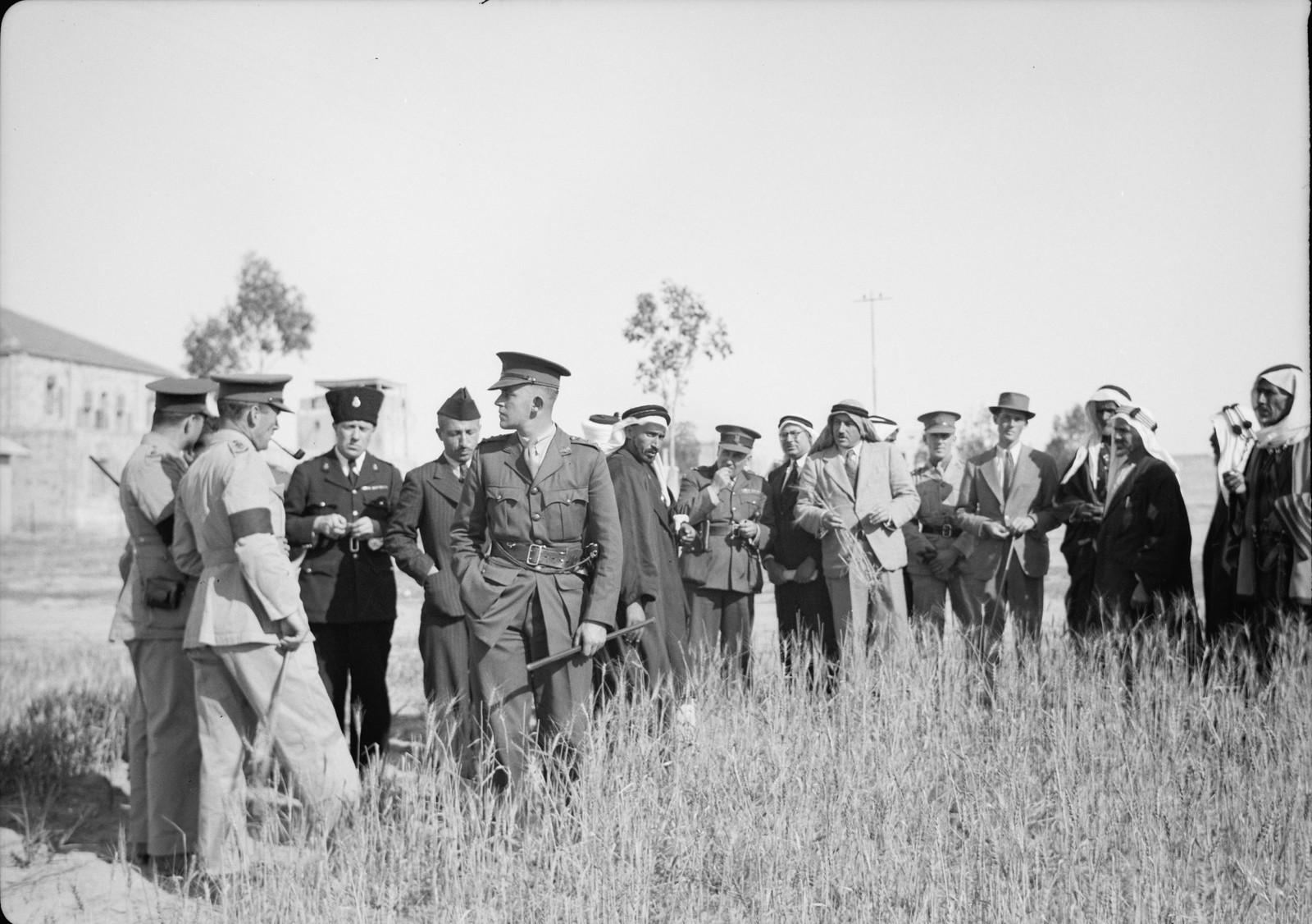 03. Экспериментальное поле австралийской пшеницы