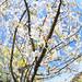 Cherry Blossom 2021 - 2