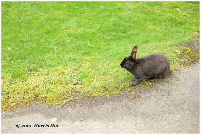 Easter Bunny XT9409e
