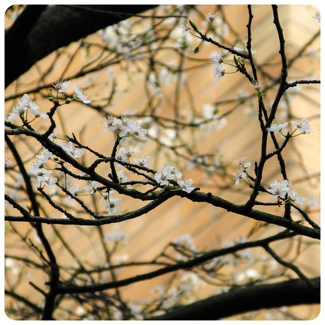 Springtime Approaches