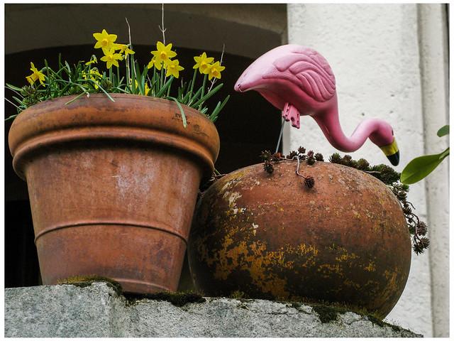 Daffodils and Flamingo