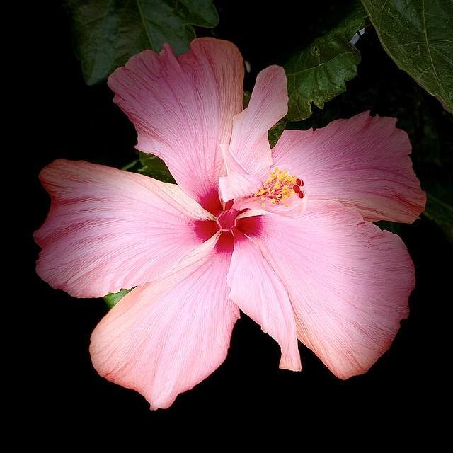 Wonderful in Pink