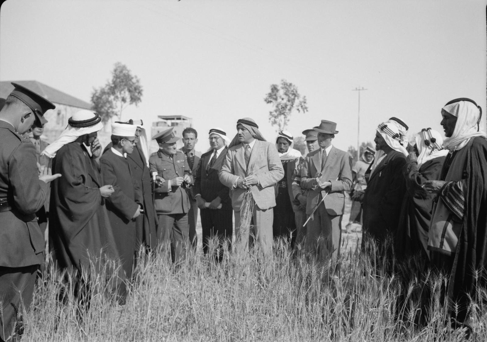 04. Экспериментальное поле австралийской пшеницы