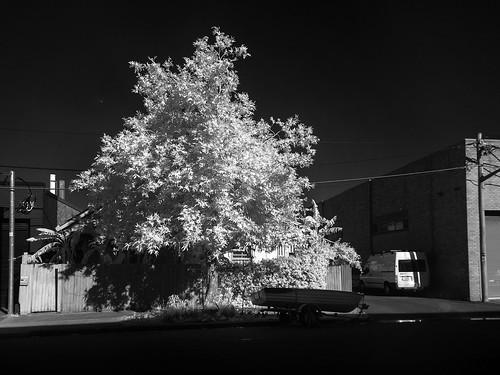 infraredimage infraredphotography infrared trees streetphotography streets streetscape streetphotographer blackwhite blackandwhite sydneystreets sydneycity sydneyinnerwest urbanlandscape urbanstreets marrickville