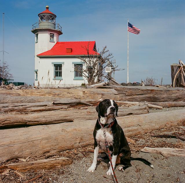 best lookin' dog in America