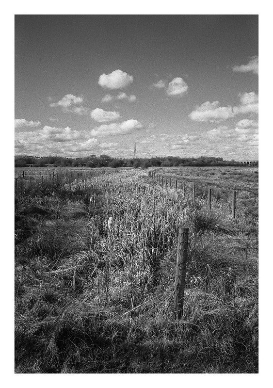 A row of rushes