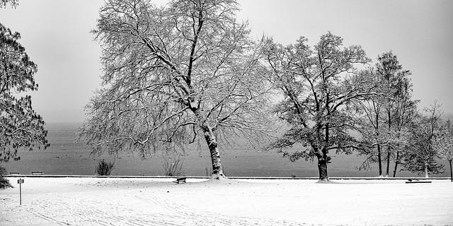 Winter at  lake Starnberg, no pedestrians