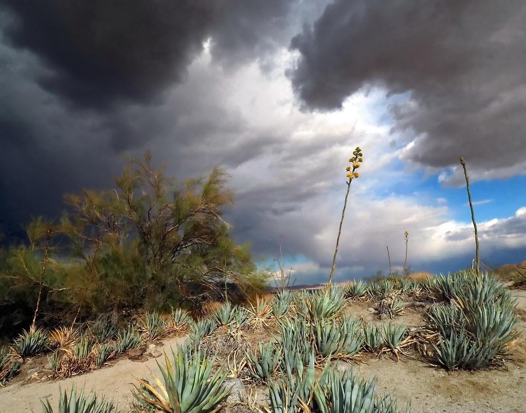 Desert storm,  Anza Borrego Desert State Park, California