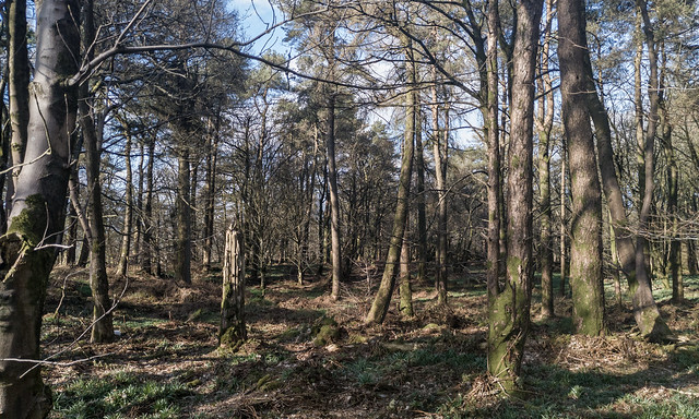 Glanderston Wood