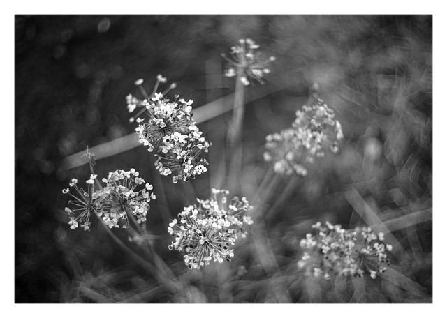 in the garden #08 (2021)
