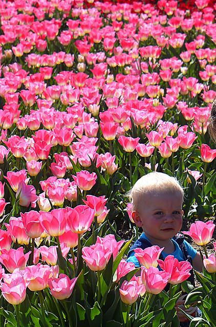 Bébé Planqué dans les tulipes _2064V